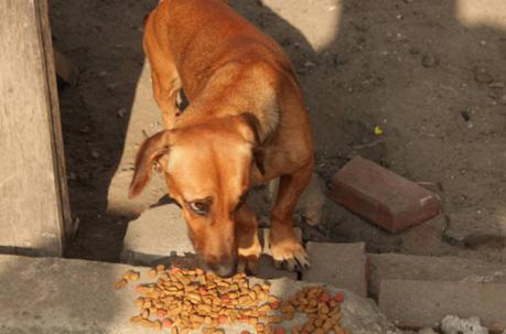 ayuda-perros-ecuador1