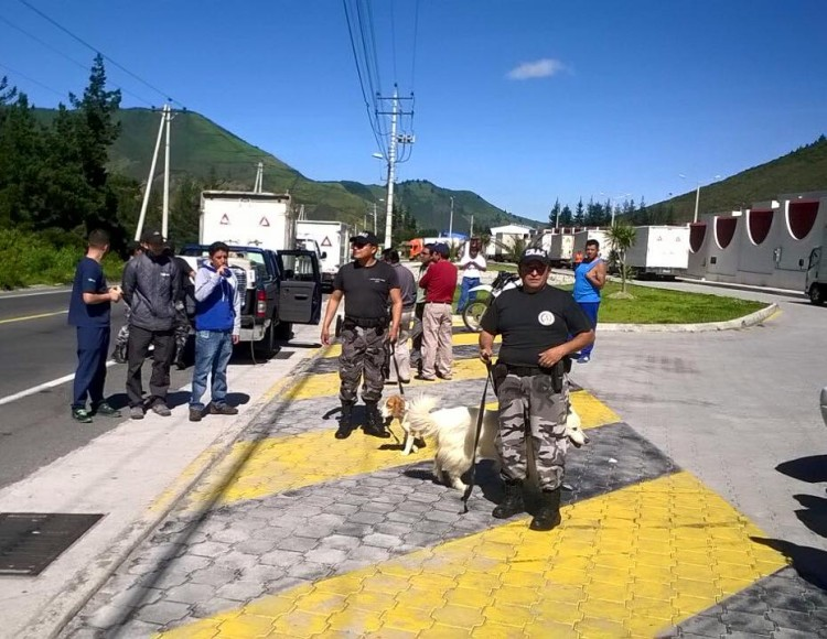 ayuda-perros-ecuador3