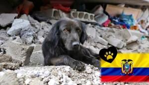 ayuda-perros-ecuador5 - copia