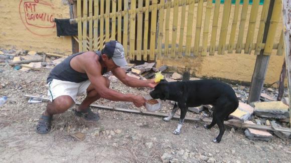 ayuda-perros-ecuador6