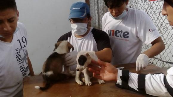 ayuda-perros-ecuador7