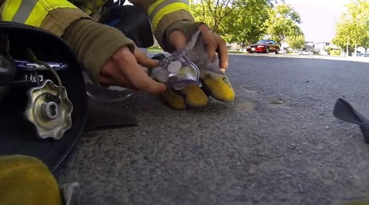 bomberos salvan gatito 4