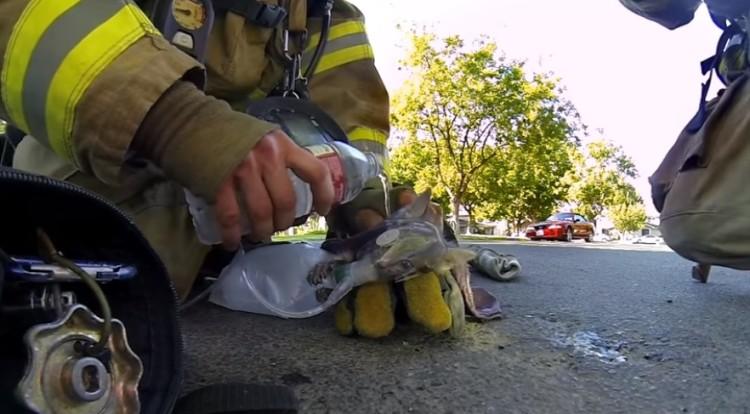bomberos salvan gatito 5