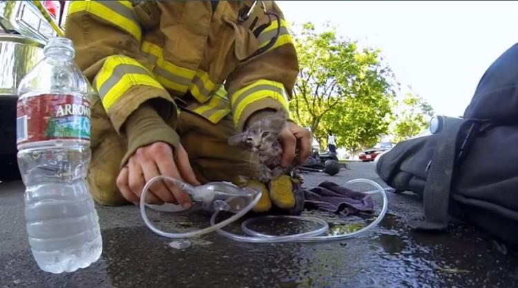 bomberos salvan gatito 6