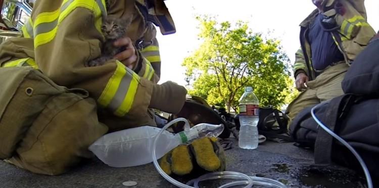 bomberos salvan gatito 7