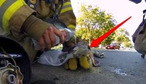 bomberos salvan gatito 8