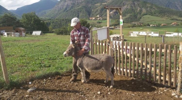 burro-rescatado2