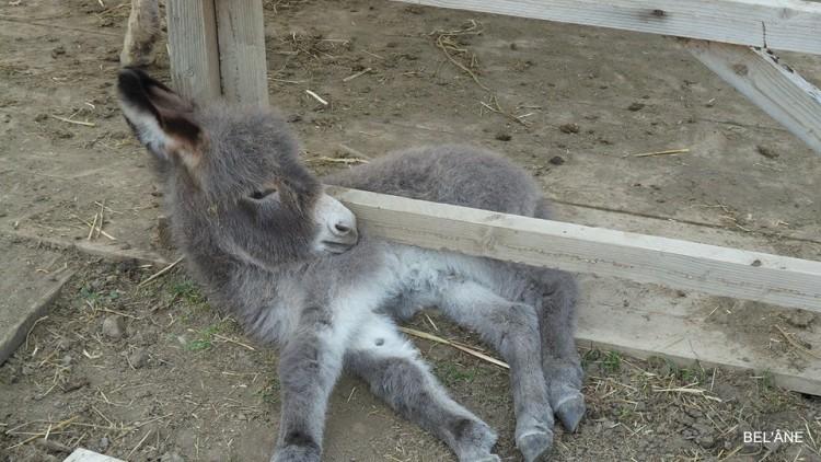 burro-rescatado8