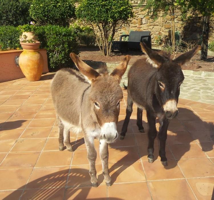 burro-rescatado9