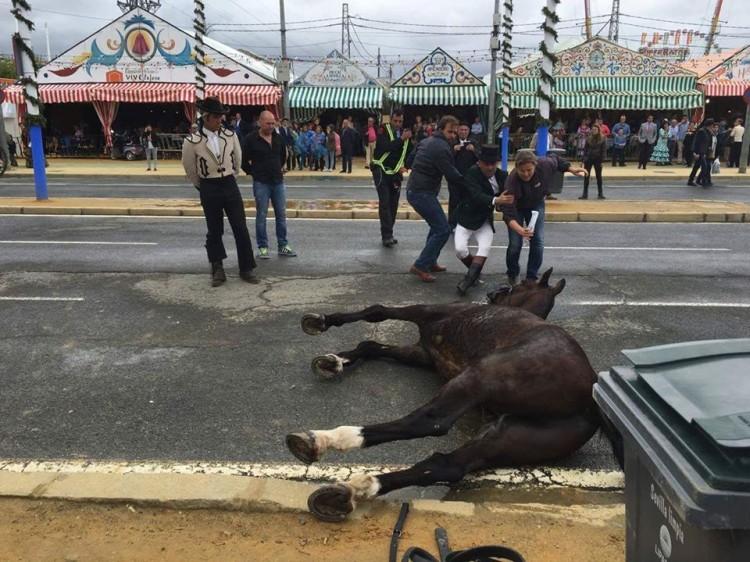 caballo-deshidratado-sevilla-4