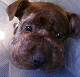cachorro-rescatado-baltimore1 - copia (2)