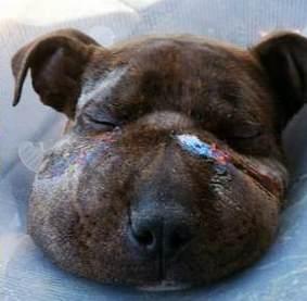 cachorro-rescatado-baltimore1 - copia (3)