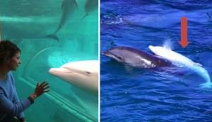 delfin-albino