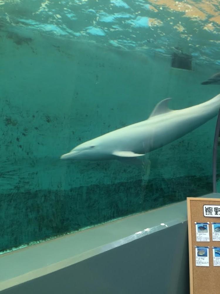 delfin-albino1