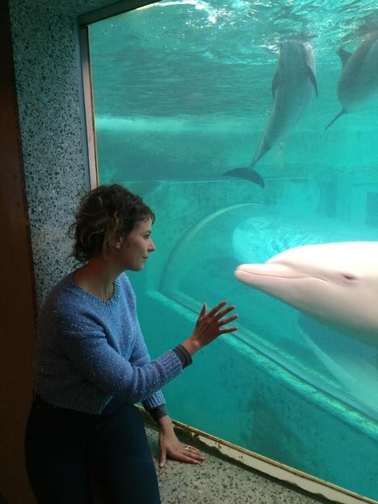 delfin-albino2