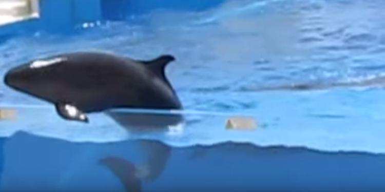 delfin-intenta-escapar1