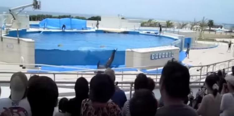 delfin-intenta-escapar2