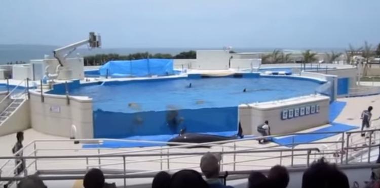 delfin-intenta-escapar3