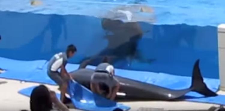 delfin-intenta-escapar4