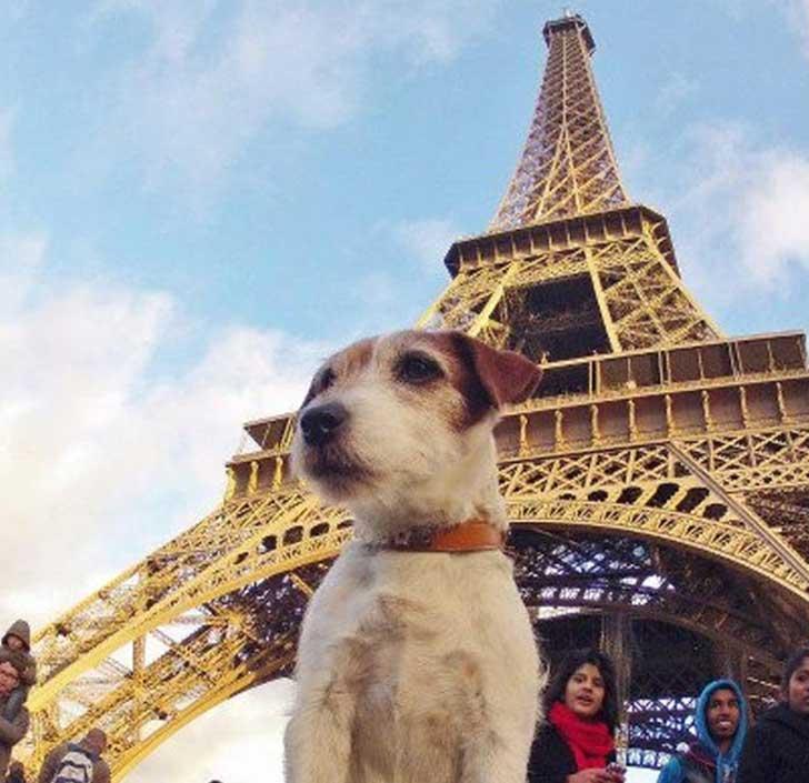 derechos animales en francia 3