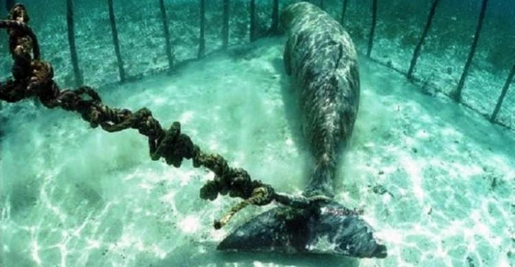dugones-encerrados-en-el-mar - copia