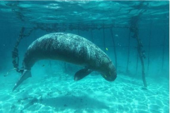 dugones-encerrados-en-el-mar2