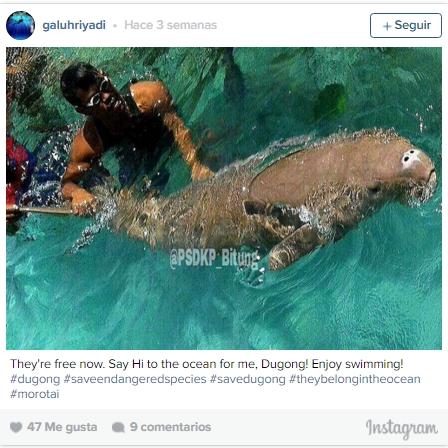 dugones-encerrados-en-el-mar4