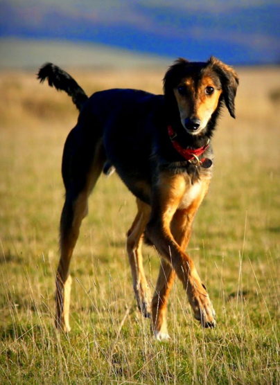 dylan-perro-recuperado-5
