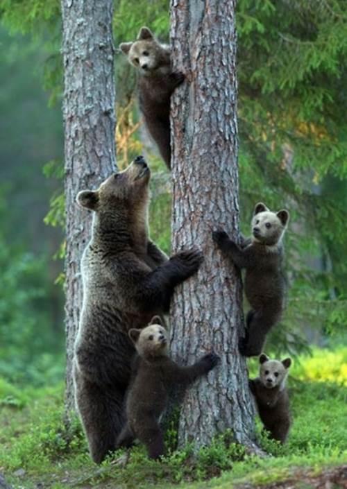 familia-animales10