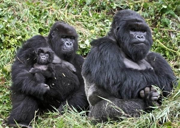 familia-animales11