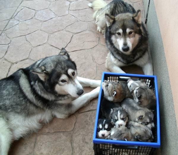 familia-animales14