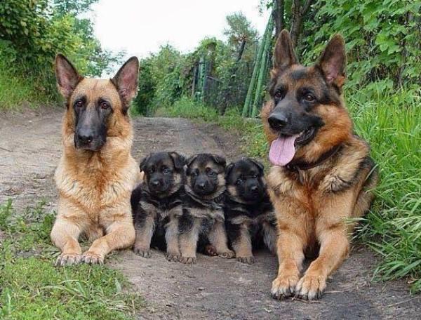 familia-animales15