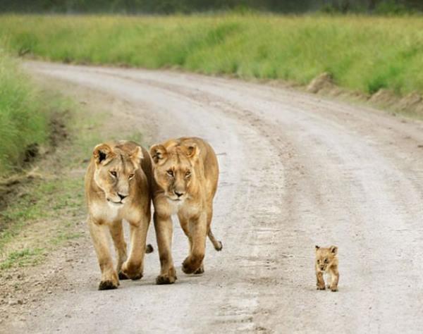 familia-animales16