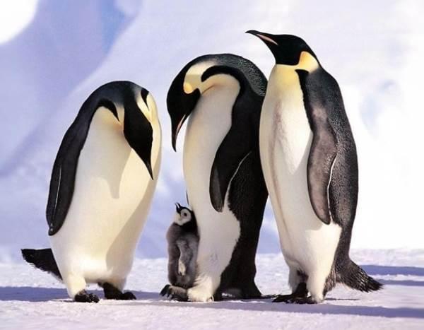 familia-animales17
