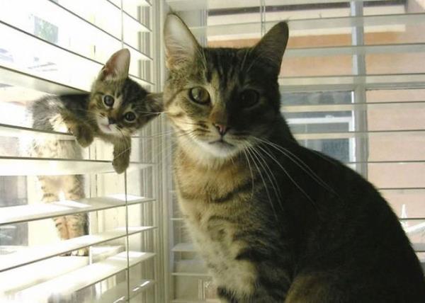 familia-animales19