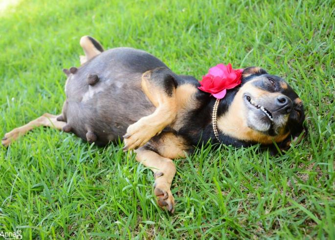 fotografia embarazada perro acostada barriguita