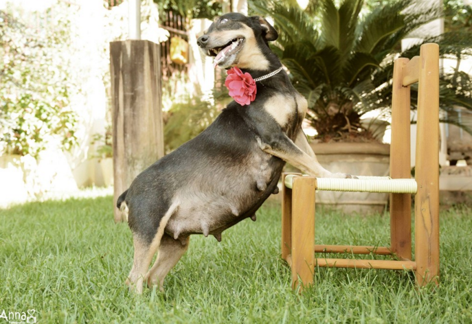 fotografia embarazada perro orgullosa