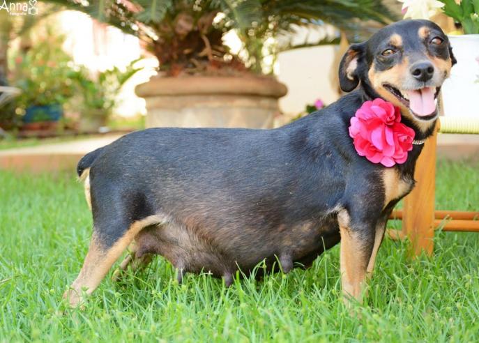 fotografia embarazada perro perfil