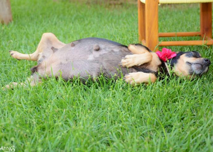 fotografia embarazada perro tierna