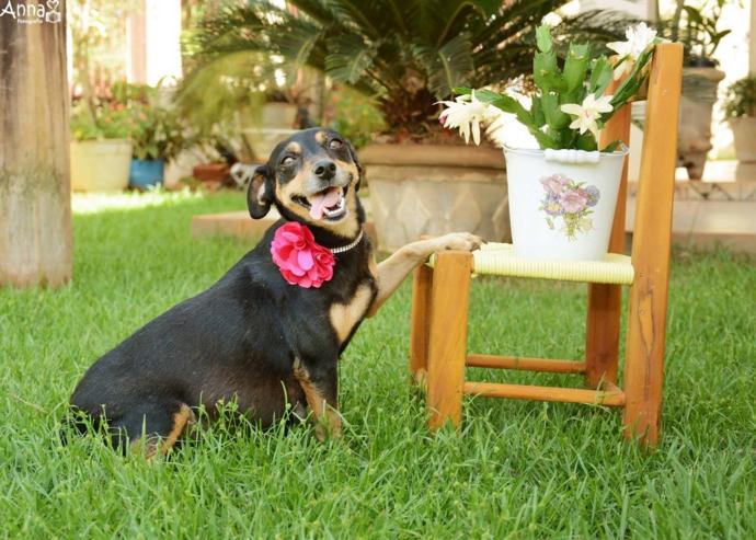 fotografia embarazada perro