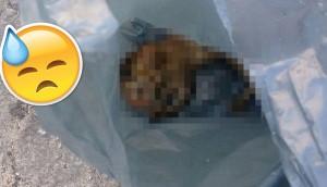gatito-bolsa-de-basura-brasil