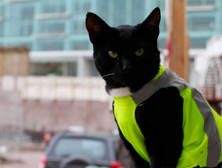 gato black 2