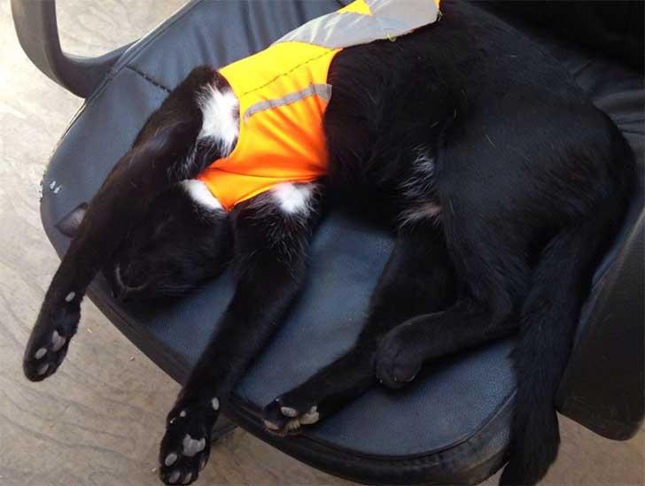 gato black 4