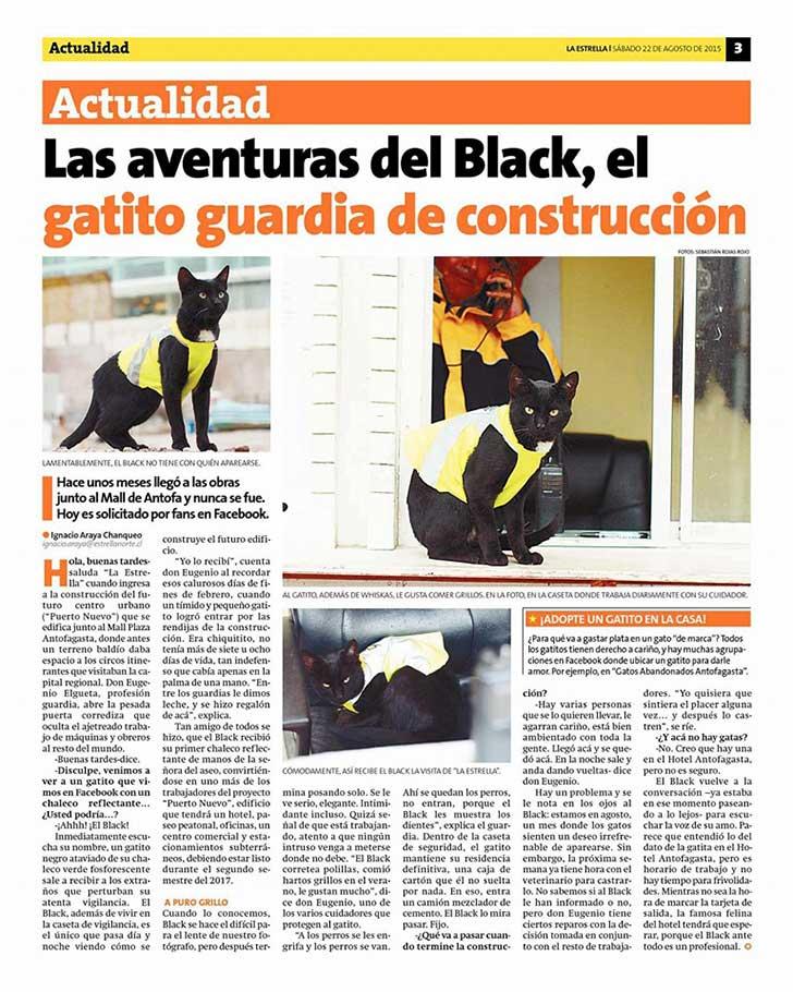 gato black 5