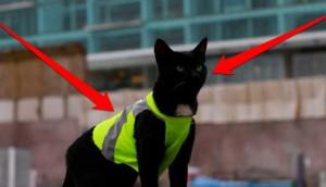 gato black 8