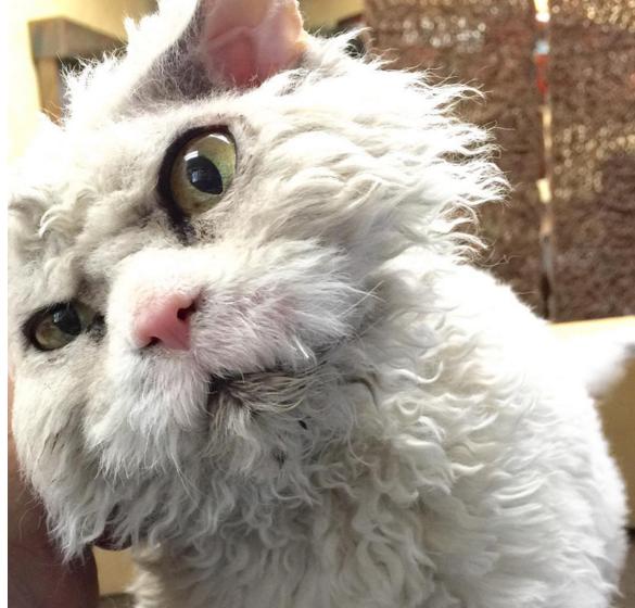 gato que nacio para juzgarte close up