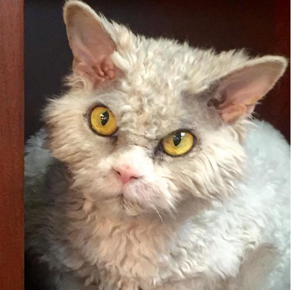 gato que nacio para juzgarte de cerca