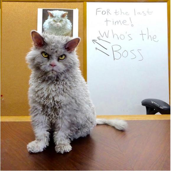 gato que nacio para juzgarte el gran jefe