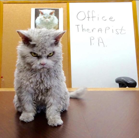 gato que nacio para juzgarte en la oficina
