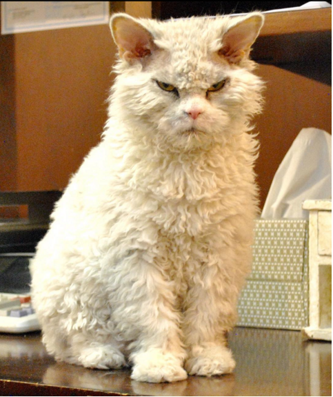 gato que nacio para juzgarte intenso